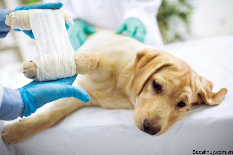Bệnh Parvo ở chó con