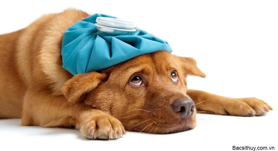 Cách chữa chó đi ngoài ra máu tươi
