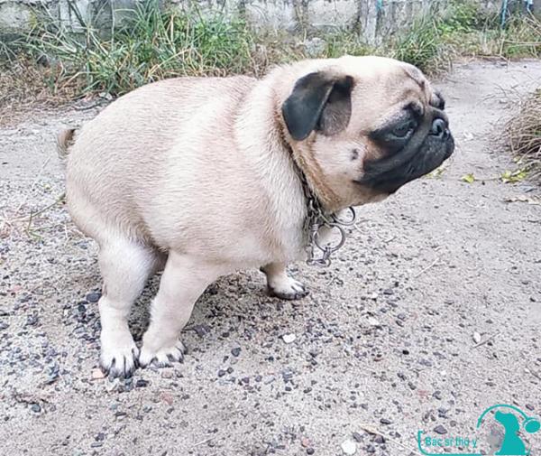 Chó bị tiêu chảy uống thuốc gì ? - bác sĩ thú y hà nội