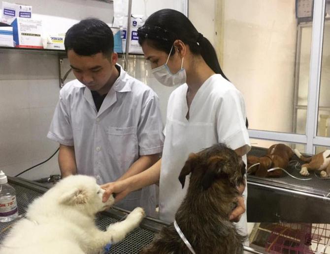 Chữa bệnh cho thú cưng những khoảnh khắc ấm lòng- bác sĩ thú y