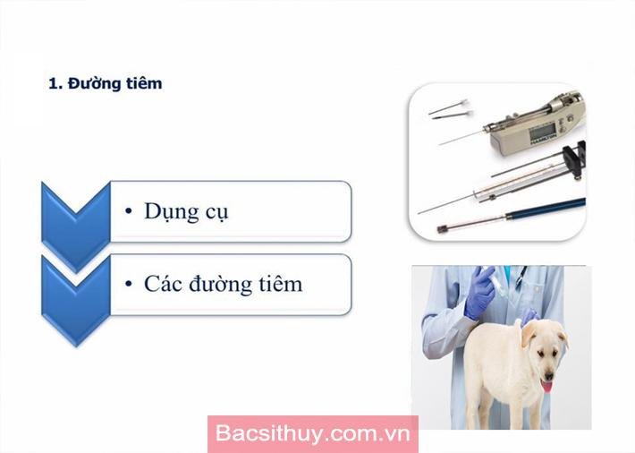 Hướng dẫn cách tiêm thuốc tiêm vacxin cho chó mèo - bác sĩ thú y