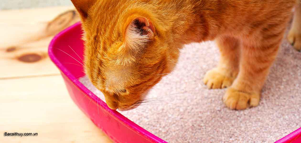 Chữa mèo bị táo bón